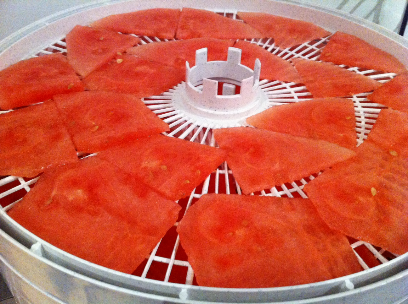 Watermelon sliced thin in the dehydrator (before dehydrating)